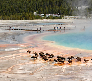 GO Yellowstone